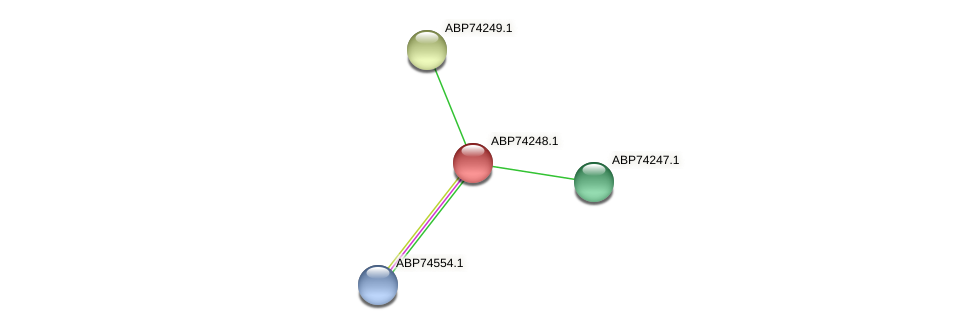ABP74248.1 protein (Shewanella putrefaciens) - STRING interaction network