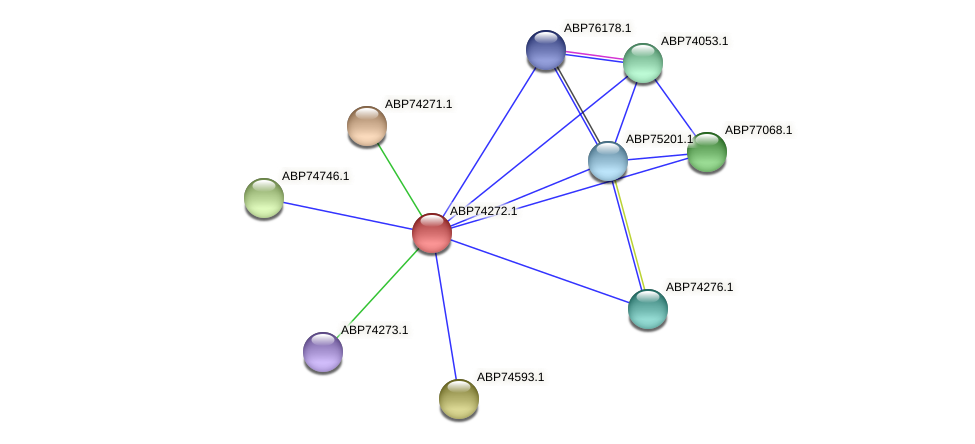 ABP74272.1 protein (Shewanella putrefaciens) - STRING interaction network
