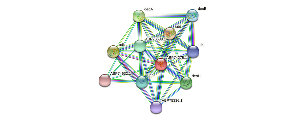 ABP74275.1 protein (Shewanella putrefaciens) - STRING interaction network