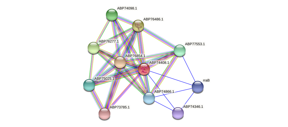 ABP74408.1 protein (Shewanella putrefaciens) - STRING interaction network