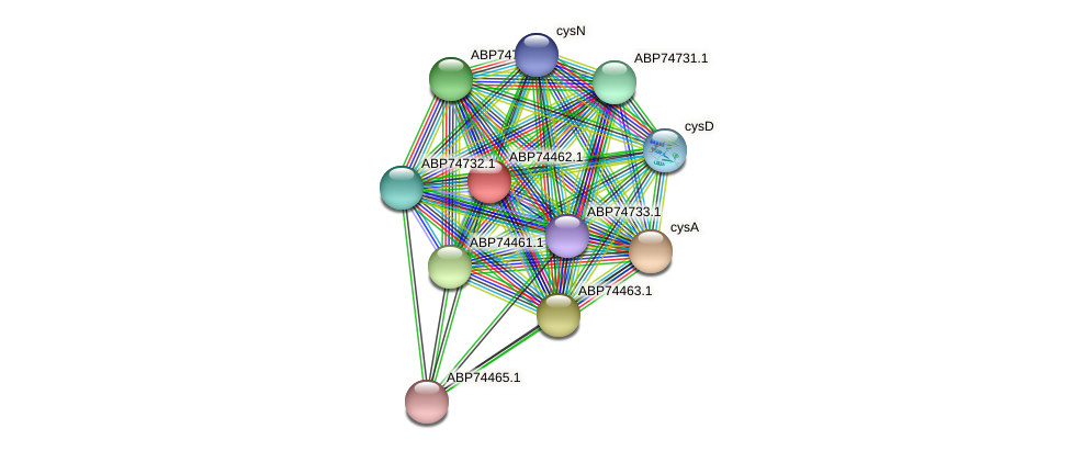 ABP74462.1 protein (Shewanella putrefaciens) - STRING interaction network