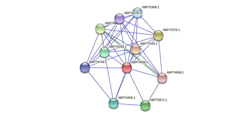 ABP74556.1 protein (Shewanella putrefaciens) - STRING interaction network