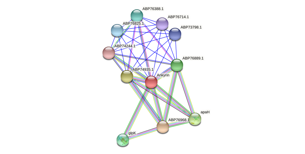 ABP74584.1 protein (Shewanella putrefaciens) - STRING interaction network
