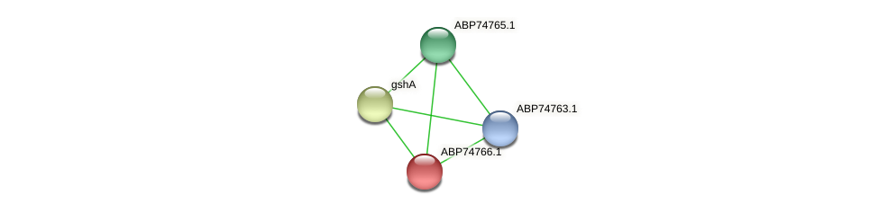 ABP74766.1 protein (Shewanella putrefaciens) - STRING interaction network