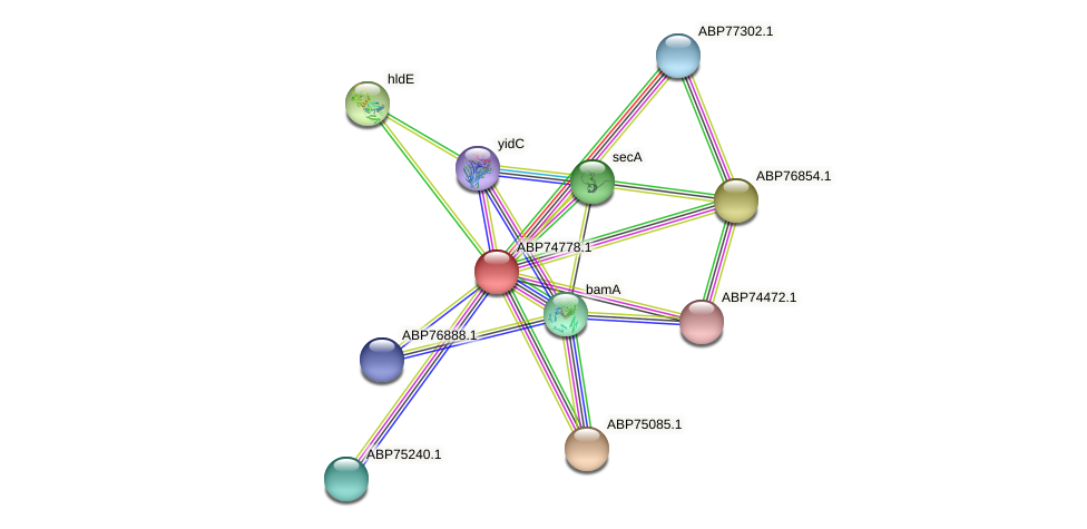 ABP74778.1 protein (Shewanella putrefaciens) - STRING interaction network