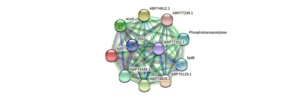 ABP74811.1 protein (Shewanella putrefaciens) - STRING interaction network