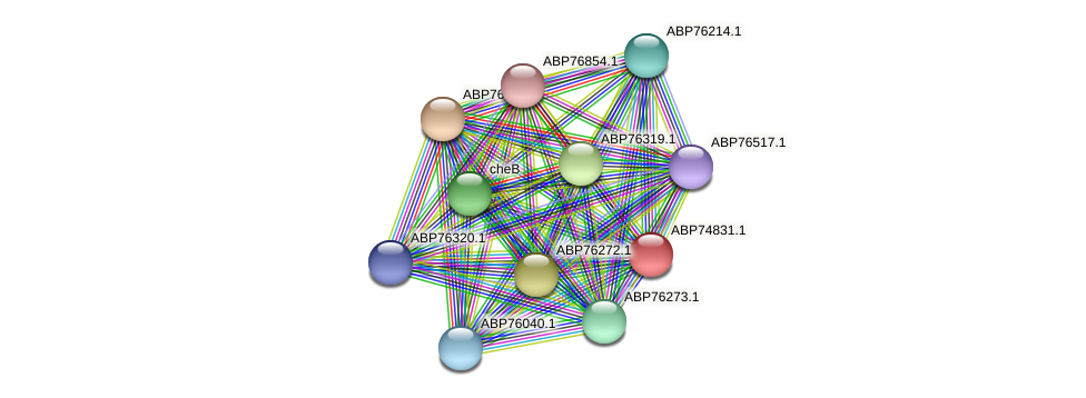 ABP74831.1 protein (Shewanella putrefaciens) - STRING interaction network