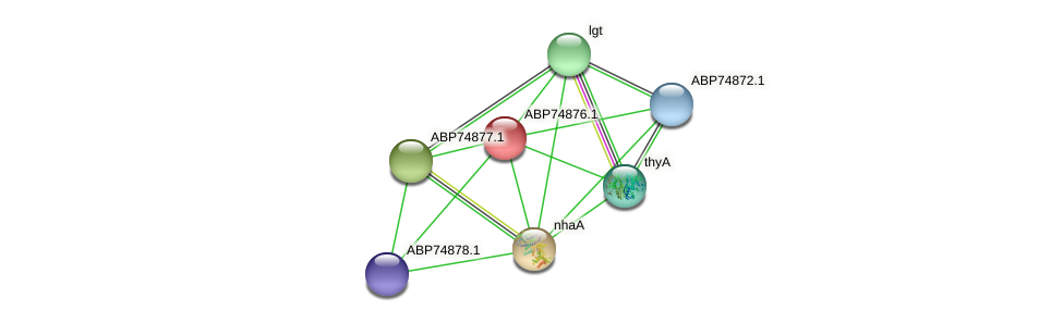 ABP74876.1 protein (Shewanella putrefaciens) - STRING interaction network