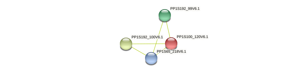 PP1S100_120V6.1 protein (Physcomitrella patens) - STRING interaction network