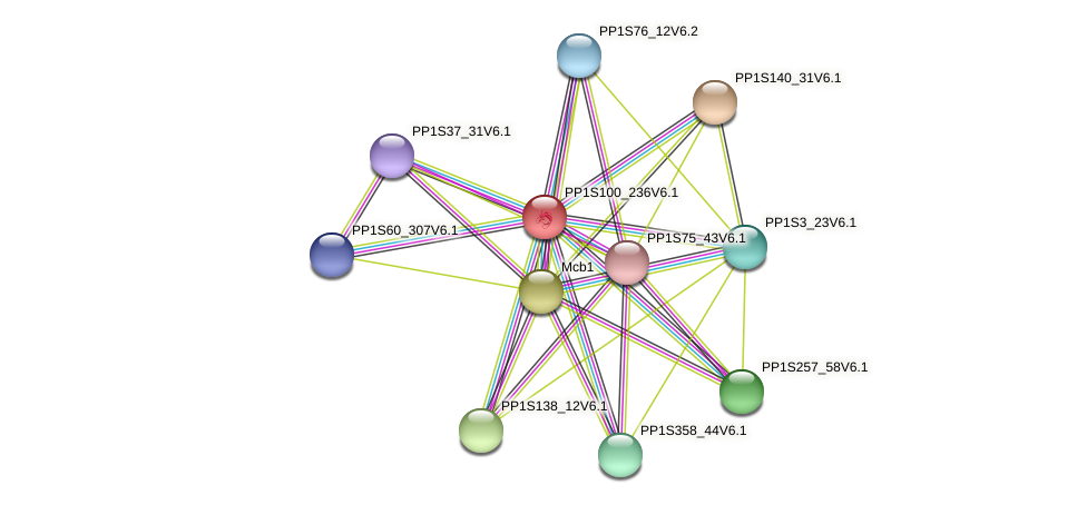 PP1S100_236V6.1 protein (Physcomitrella patens) - STRING interaction network