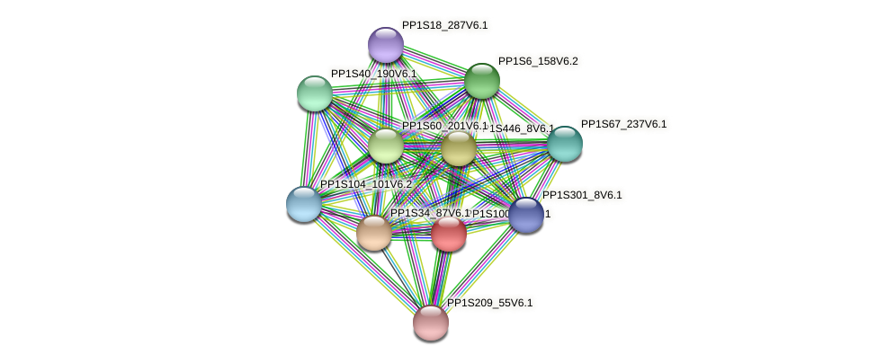 PP1S100_36V6.1 protein (Physcomitrella patens) - STRING interaction network