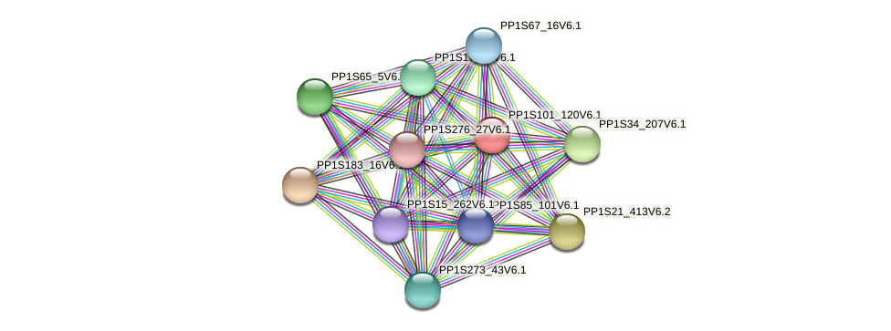 PP1S101_120V6.1 protein (Physcomitrella patens) - STRING interaction network