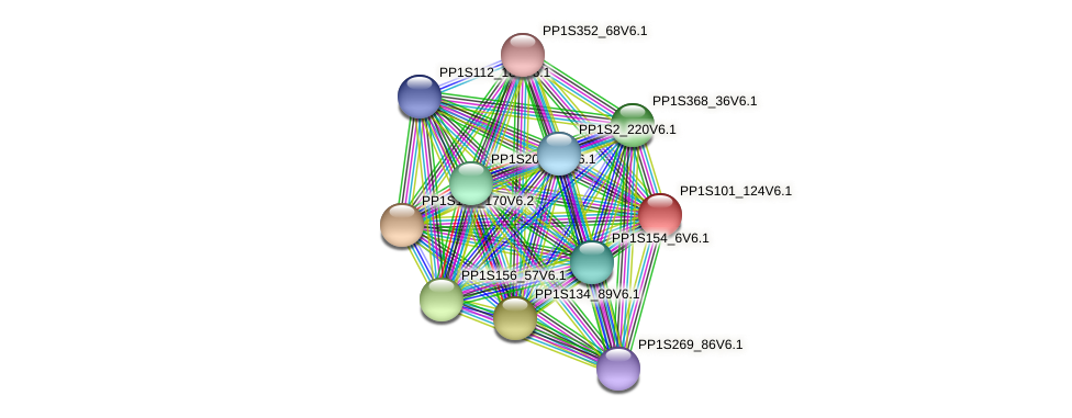 PP1S101_124V6.1 protein (Physcomitrella patens) - STRING interaction network