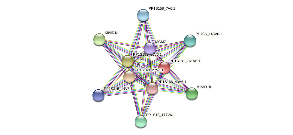 PP1S101_161V6.1 protein (Physcomitrella patens) - STRING interaction network