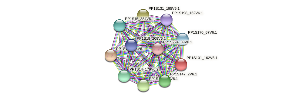 PP1S101_162V6.1 protein (Physcomitrella patens) - STRING interaction network