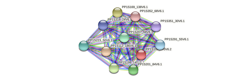 PP1S101_170V6.2 protein (Physcomitrella patens) - STRING interaction network