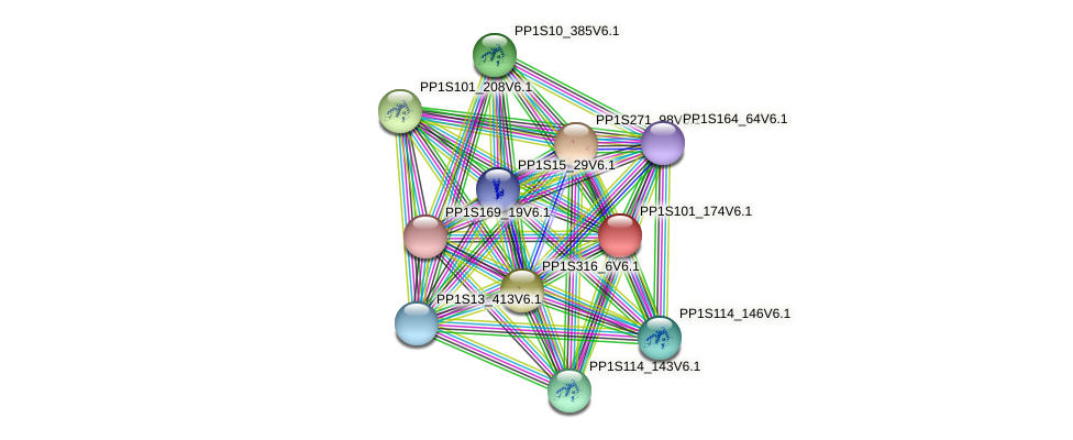 PP1S101_174V6.1 protein (Physcomitrella patens) - STRING interaction network
