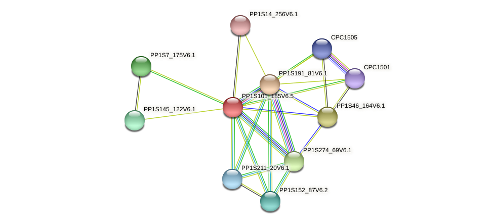 PP1S101_185V6.1 protein (Physcomitrella patens) - STRING interaction network