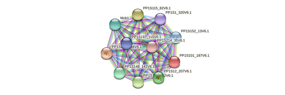 PP1S101_187V6.1 protein (Physcomitrella patens) - STRING interaction network