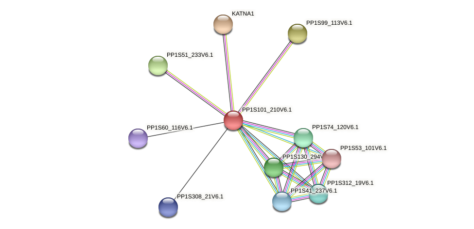 PP1S101_210V6.1 protein (Physcomitrella patens) - STRING interaction network