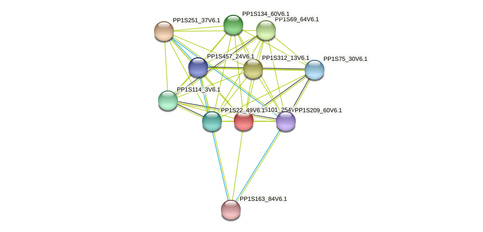 PP1S101_254V6.2 protein (Physcomitrella patens) - STRING interaction network