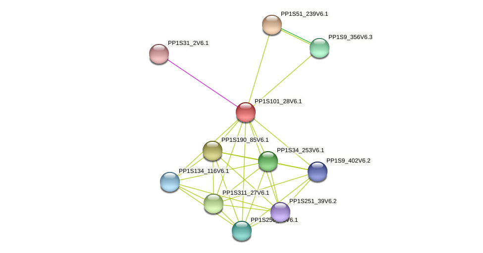 PP1S101_28V6.1 protein (Physcomitrella patens) - STRING interaction network