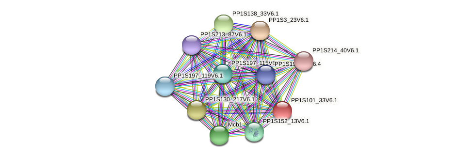 PP1S101_33V6.1 protein (Physcomitrella patens) - STRING interaction network