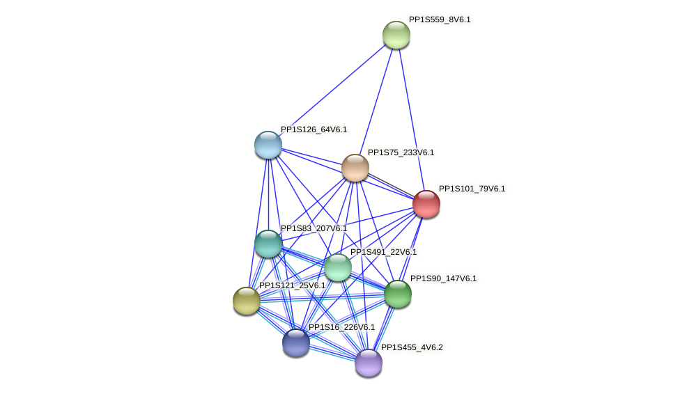 PP1S101_79V6.1 protein (Physcomitrella patens) - STRING interaction network