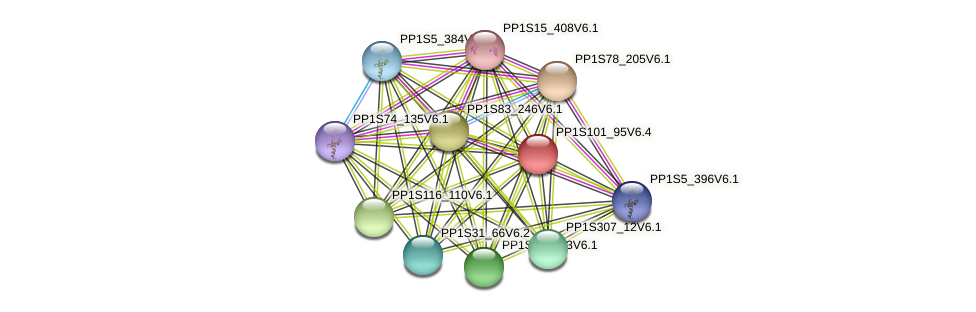 PP1S101_95V6.1 protein (Physcomitrella patens) - STRING interaction network