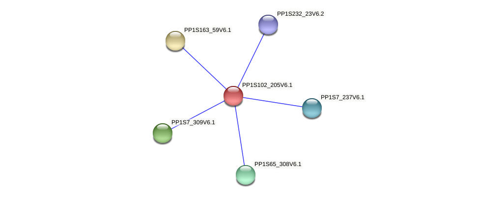 PP1S102_205V6.1 protein (Physcomitrella patens) - STRING interaction network