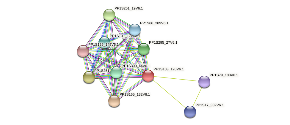 PP1S103_120V6.1 protein (Physcomitrella patens) - STRING interaction network