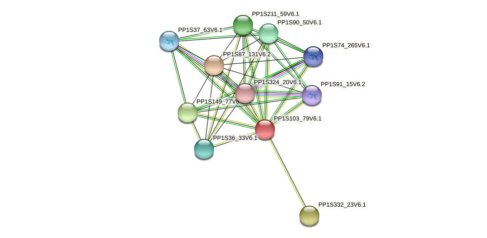 PP1S103_79V6.1 protein (Physcomitrella patens) - STRING interaction network