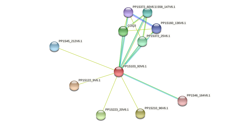 PP1S103_93V6.1 protein (Physcomitrella patens) - STRING interaction network