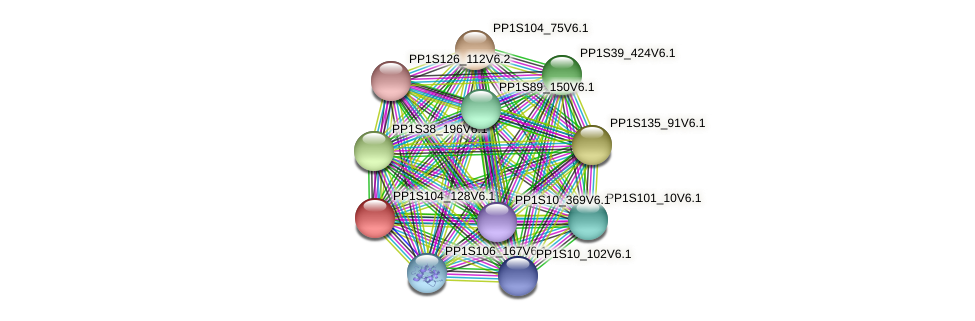 PP1S104_128V6.1 protein (Physcomitrella patens) - STRING interaction network