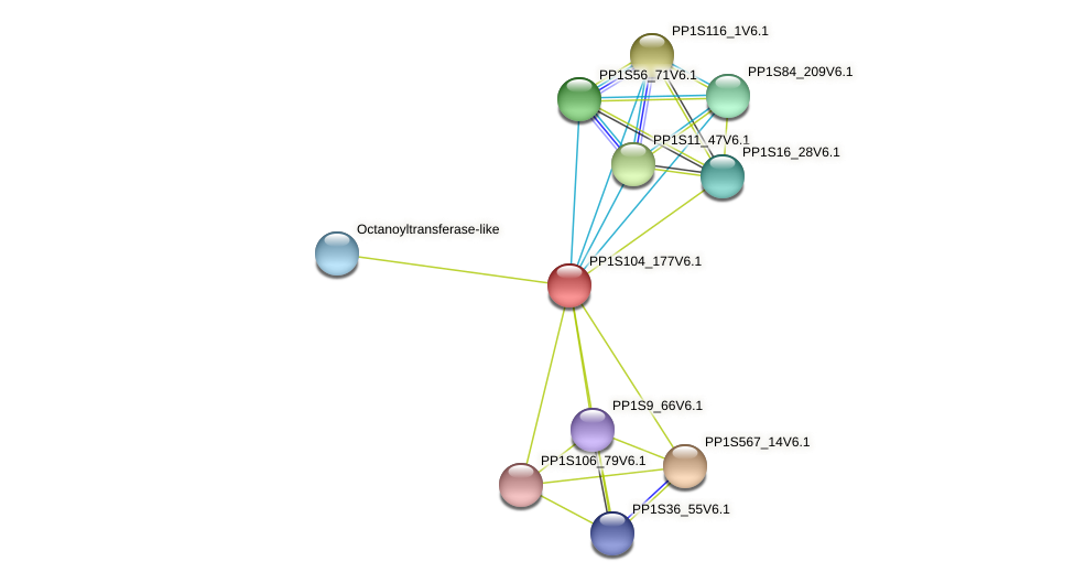 PP1S104_177V6.1 protein (Physcomitrella patens) - STRING interaction network