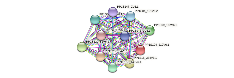 PP1S104_210V6.1 protein (Physcomitrella patens) - STRING interaction network