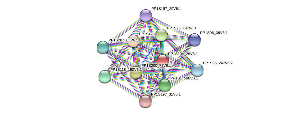 PP1S104_29V6.1 protein (Physcomitrella patens) - STRING interaction network