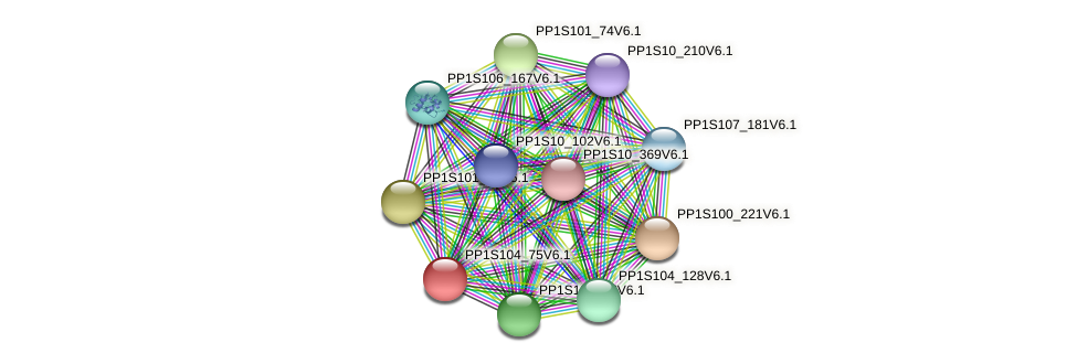 PP1S104_75V6.1 protein (Physcomitrella patens) - STRING interaction network