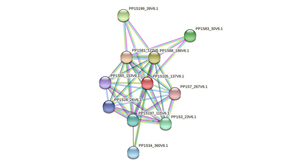 ppabcc5 protein (Physcomitrella patens) - STRING interaction network