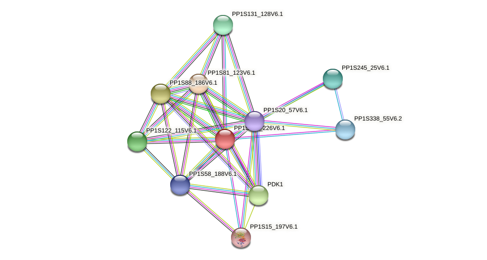 PP1S105_226V6.1 protein (Physcomitrella patens) - STRING interaction network