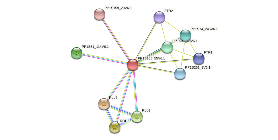 PP1S105_55V6.1 protein (Physcomitrella patens) - STRING interaction network