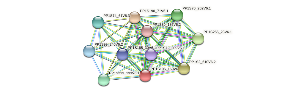 PP1S106_169V6.1 protein (Physcomitrella patens) - STRING interaction network