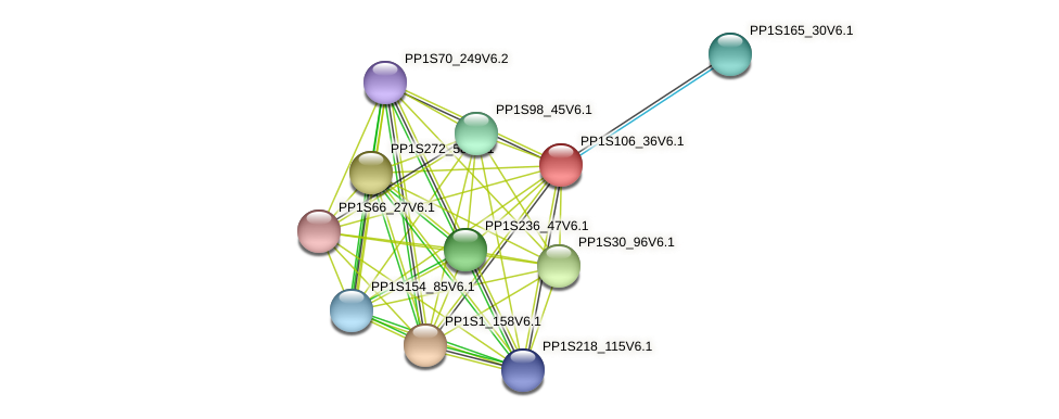 PP1S106_36V6.1 protein (Physcomitrella patens) - STRING interaction network