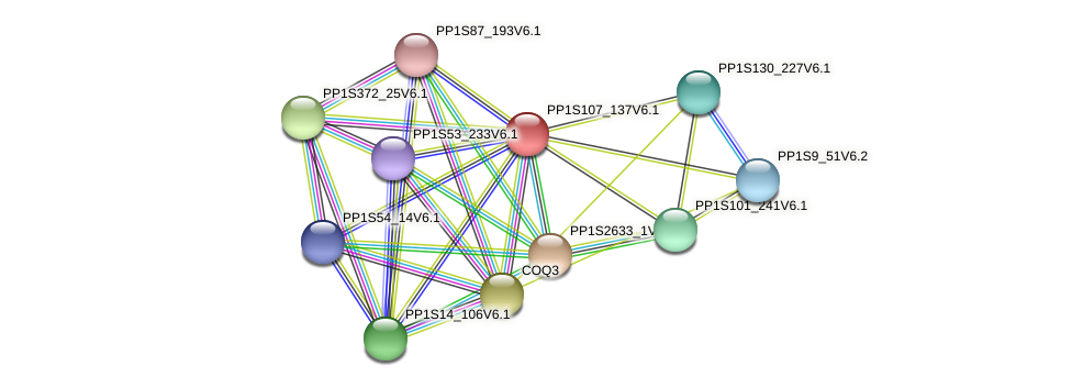 PP1S107_137V6.1 protein (Physcomitrella patens) - STRING interaction network