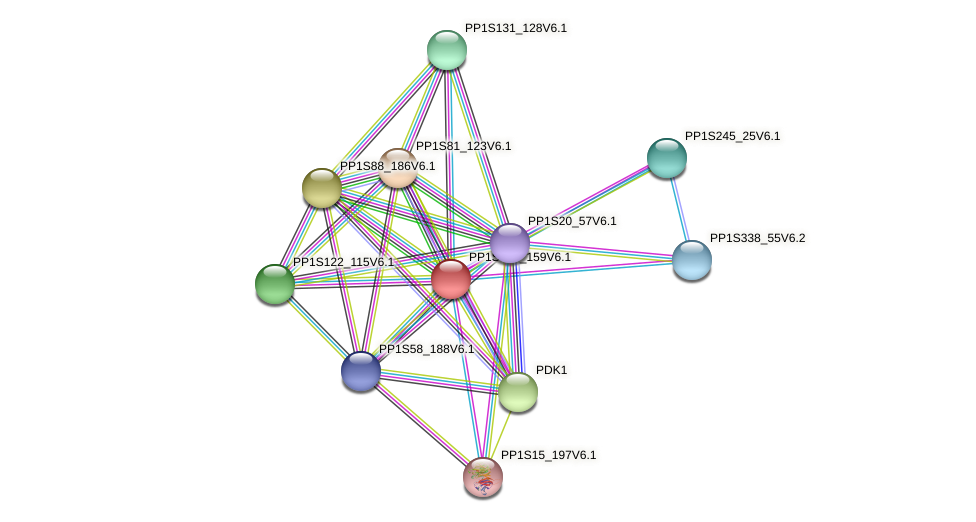 PP1S107_159V6.1 protein (Physcomitrella patens) - STRING interaction network
