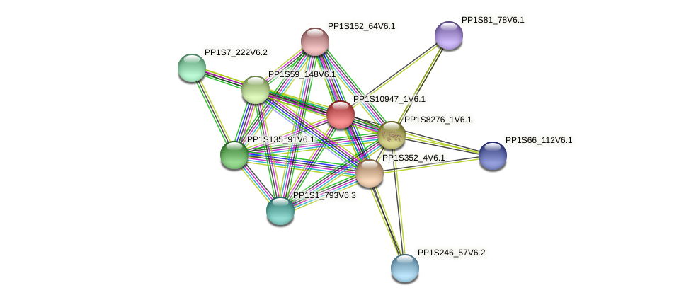 PP1S10947_1V6.1 protein (Physcomitrella patens) - STRING interaction network
