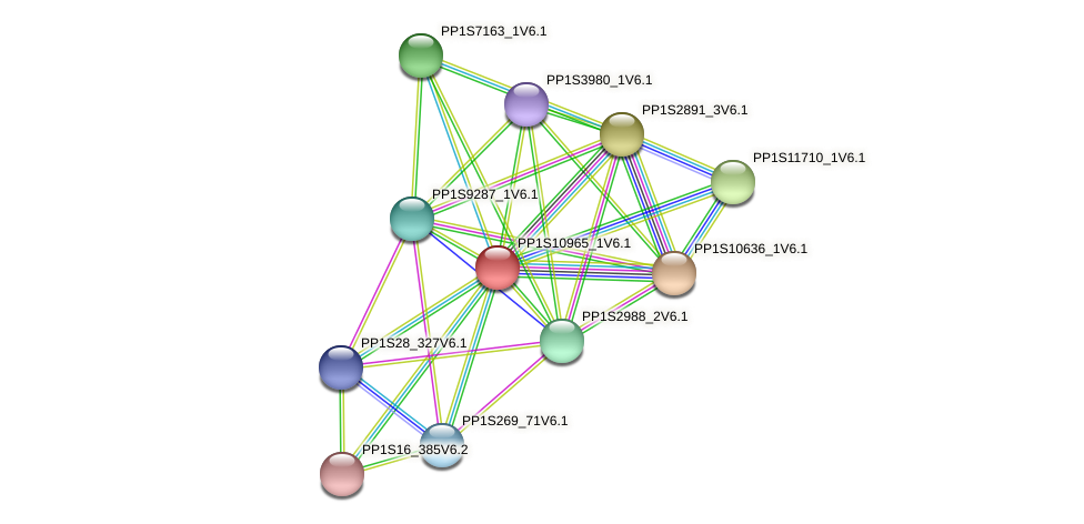 PP1S10965_1V6.1 protein (Physcomitrella patens) - STRING interaction network