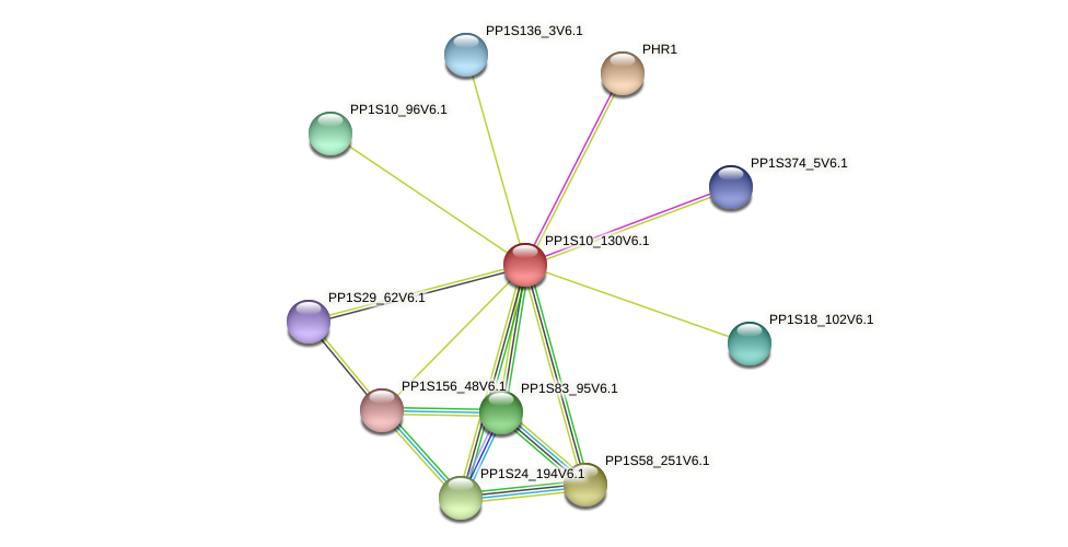 PP1S10_130V6.1 protein (Physcomitrella patens) - STRING interaction network