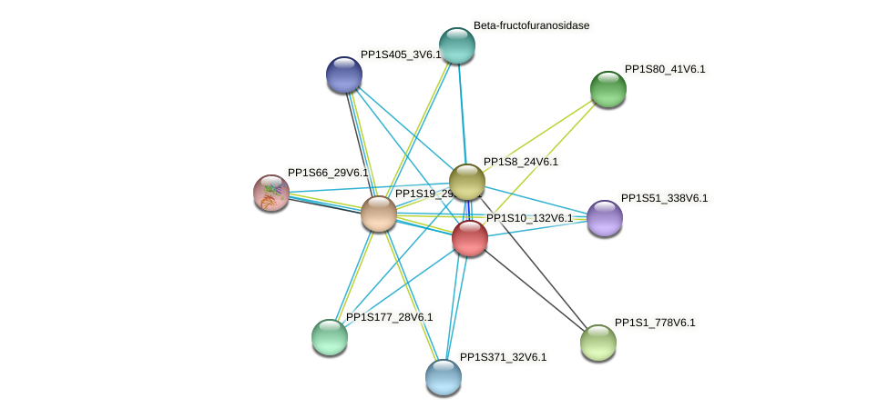 PP1S10_132V6.1 protein (Physcomitrella patens) - STRING interaction network