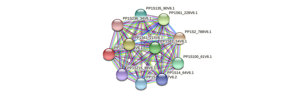 PP1S10_175V6.1 protein (Physcomitrella patens) - STRING interaction network